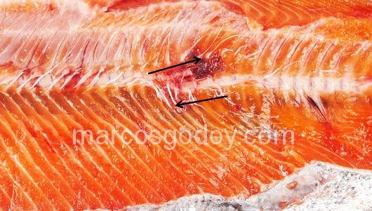 vertebral-compression-fracture-in-coho-salmon-viii