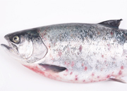 SRS Coho salmon small